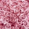 Rose Rosse 2